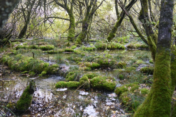 Marais tufeux aux sources de l'Ignon